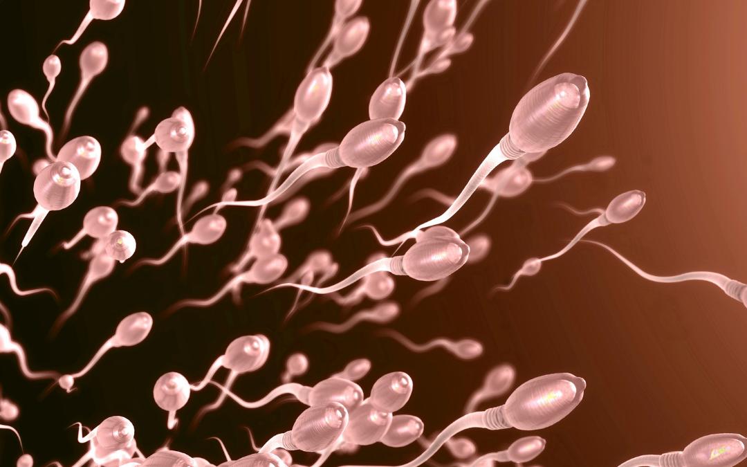 Obesità: quali conseguenze per la fertilità maschile?